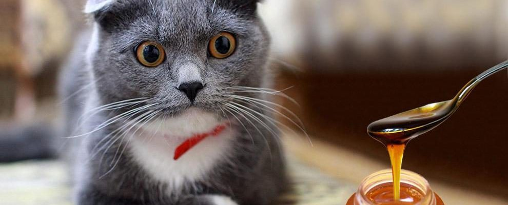 Can Cats Eat Honey [2021] OK Safe or Bad for Kittens to Have?